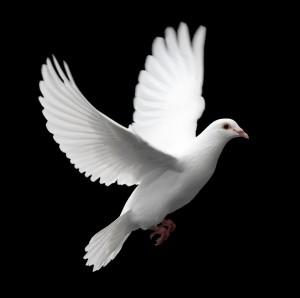 Quem são os construtores de paz?