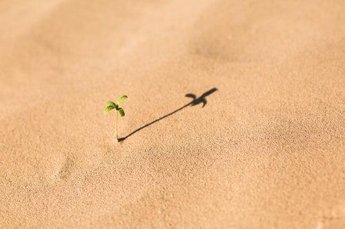 A semente da fé